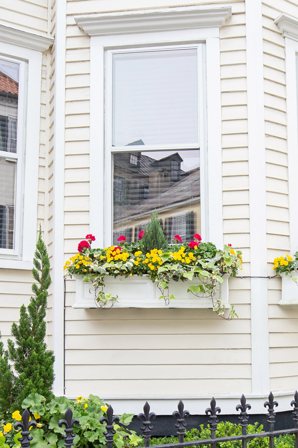 pink and yellow flowers in a window box