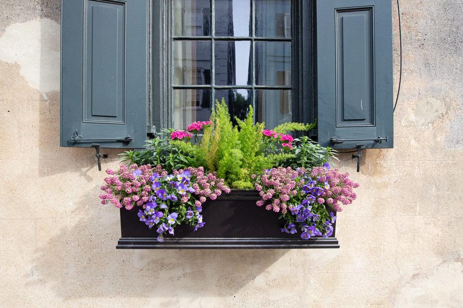 purple and pink flower window box ideas from Charleston