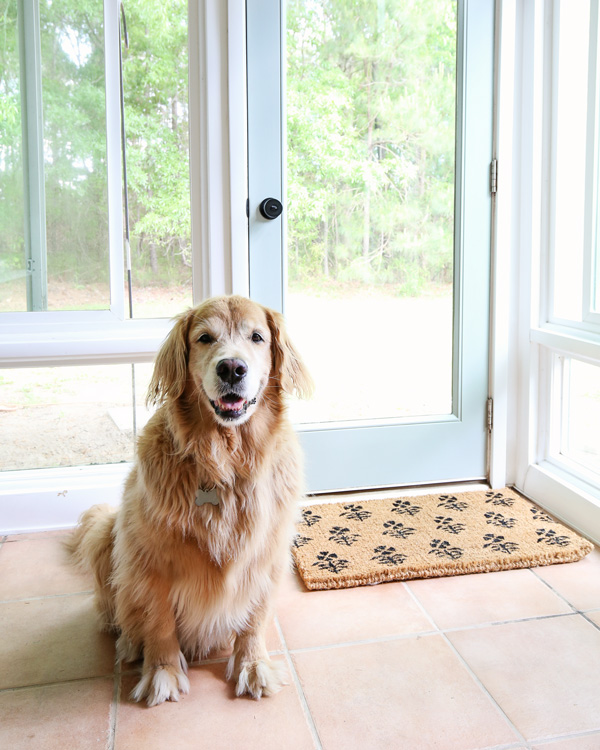 dog in front of patio door makeover