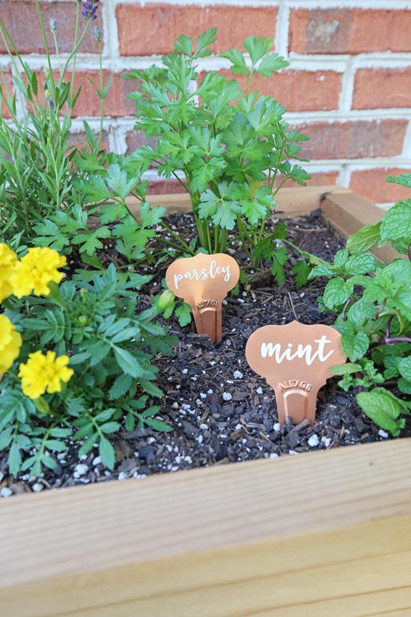DIY plant labels