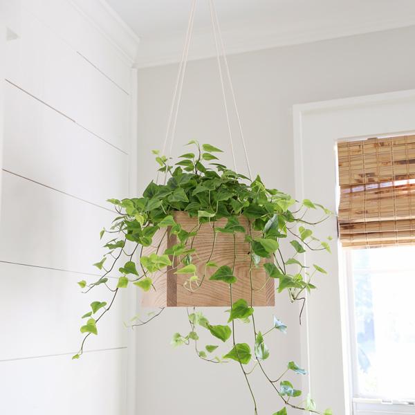 diy rope plant hanger